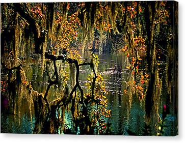 Through The Moss Canvas Print
