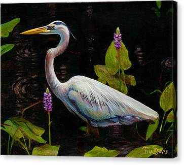 Through The Pickerelweed Canvas Print by Tim Davis