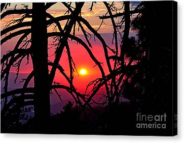 Through The Pines Landscape Canvas Print