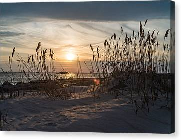Through The Reeds Canvas Print by Kristopher Schoenleber