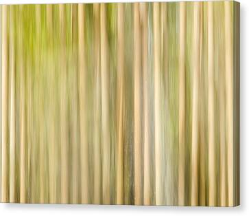Through The Trees Canvas Print by Carolyn Marshall