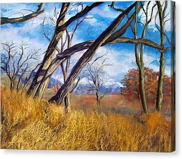 Through The Trees Canvas Print by Julie Maas