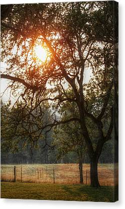 Through The Trees Canvas Print by Melanie Lankford Photography