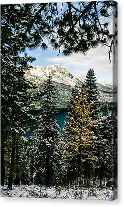 Through The Trees Canvas Print by Mitch Shindelbower