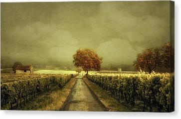 Shed Canvas Print - Through The Vineyard by Lars Van De
