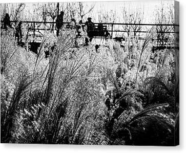 Through The Winter Grasses Canvas Print by Jon Woodhams