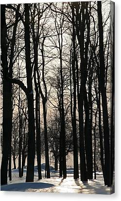 Through The Winter Trees Canvas Print by Heather Allen
