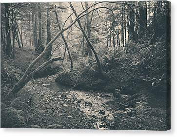 Through The Woods Canvas Print by Laurie Search