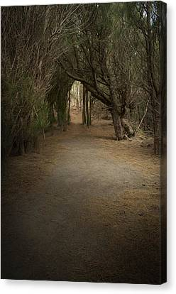 Through The Woods Canvas Print by Robert Martin