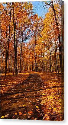 Through The Woods We Go Canvas Print by Phil Koch