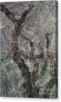 Canvas Print featuring the photograph Thru Rain by Lee Craig
