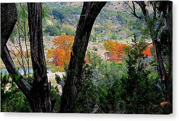 Canvas Print featuring the photograph Thru The Trees by David  Norman
