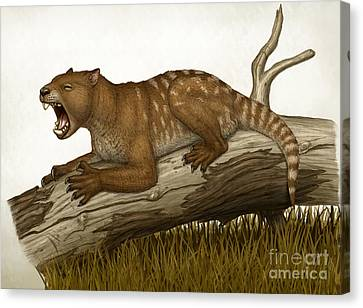 Thylacoleo Carnifex, A Marsupial Canvas Print by Heraldo Mussolini