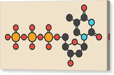 Thymidine Triphosphate Molecule Canvas Print by Molekuul