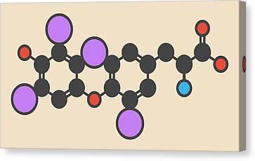 Thyroxine Thyroid Hormone Molecule Canvas Print by Molekuul