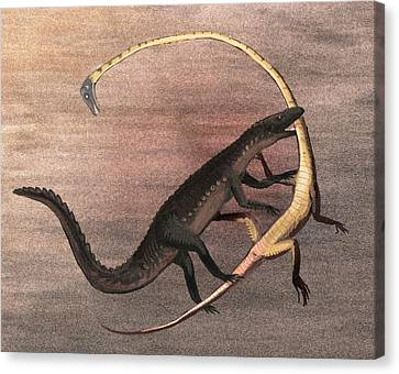 Ticinosuchus And Tanystropheus Fighting Canvas Print by Nemo Ramjet