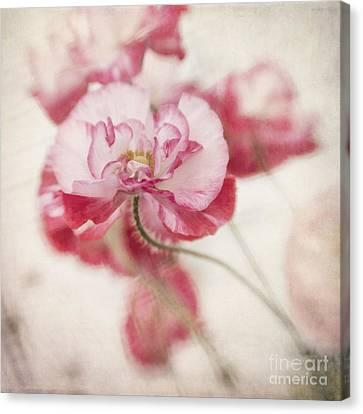 Tickle Me Pink Canvas Print by Priska Wettstein