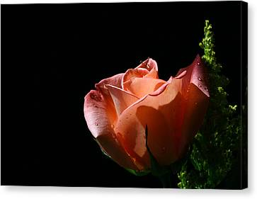 Canvas Print featuring the photograph Tickled Coral by Doug Norkum