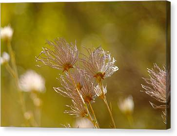 Morn Canvas Print - Tickling The Morning Wind by Jeff Swan