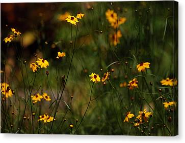 Tickseed Forest Canvas Print by Lorenzo Cassina