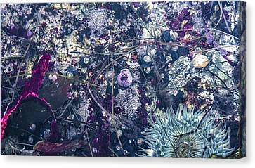 Canvas Print featuring the mixed media Tidal Pool Assortment by Terry Rowe