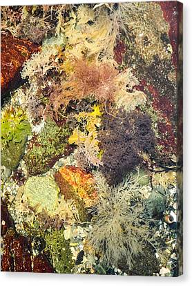 Tidal Pool Color Canvas Print by Debbie Green