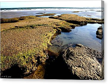 Canvas Print featuring the photograph Tide Pool II by Amanda Holmes Tzafrir