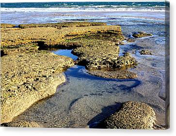Tide Pool IIi Canvas Print by Amanda Holmes Tzafrir