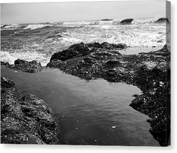 Tide Pool Canvas Print