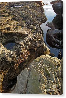 Tide Pools - 02 Canvas Print by Gregory Dyer