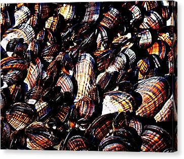 Tidewater Mussels Canvas Print by Nick Kloepping