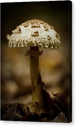 Mushroom Canvas Print - Tiffany Shroom by Shane Holsclaw