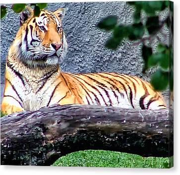 Canvas Print featuring the photograph Tiger 1 by Dawn Eshelman