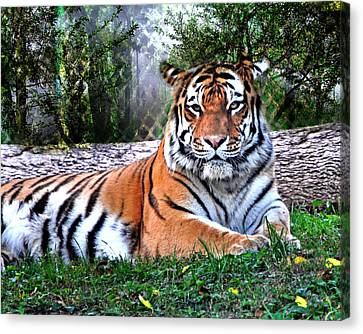 Canvas Print - Tiger 2 by Marty Koch