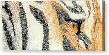 Canvas Print featuring the drawing Tiger Amber by Stephanie Grant