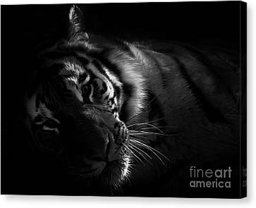 Tiger Beauty Canvas Print