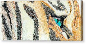 Canvas Print featuring the drawing Tiger Blue by Stephanie Grant
