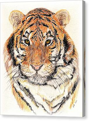 Canvas Print featuring the drawing Tiger Bright by Stephanie Grant