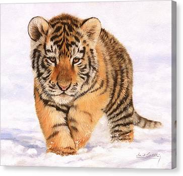 Tiger Cub In Snow Painting Canvas Print by David Stribbling