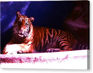 Canvas Print featuring the photograph Tiger Cub by Victoria Lakes