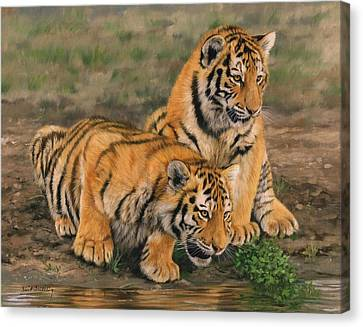 Tiger Cubs Canvas Print by David Stribbling
