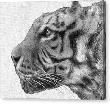 Tiger Canvas Print by Eric Fan