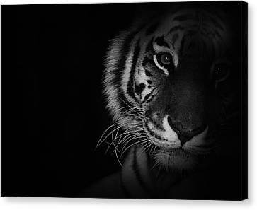 Tiger Eyes Canvas Print by Martin Newman