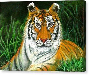 Canvas Print featuring the pastel Tiger Eyes - Pastel by Antonia Citrino