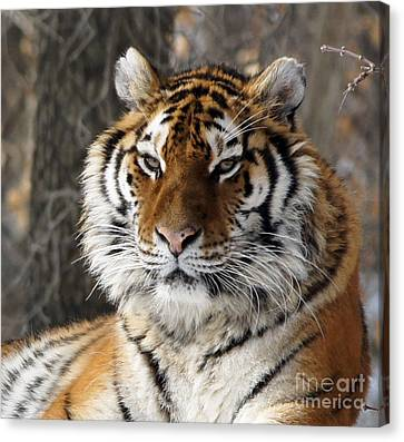 Tiger Head Canvas Print