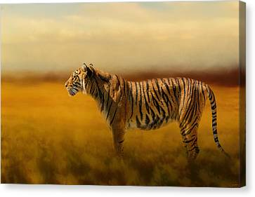 Tiger In The Golden Field Canvas Print by Jai Johnson