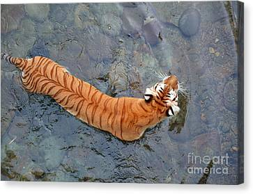 Canvas Print featuring the photograph Tiger In The Stream by Robert Meanor