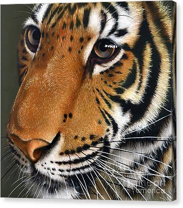 Tiger Canvas Print by Jurek Zamoyski