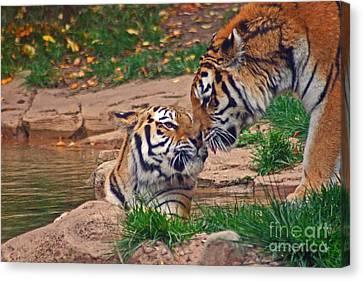 Tiger Kiss Canvas Print by David Rucker