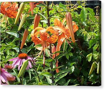 Tiger Lilies Canvas Print by Catherine Gagne